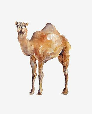 Watercolor Camel PNG