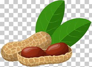 Peanut PNG