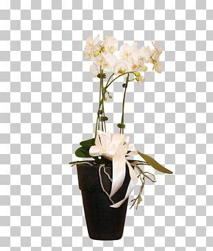 Moth Orchids Floral Design Cut Flowers Vase PNG