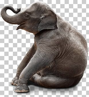 Chair Stock Photography Bench Elephant Sitting PNG
