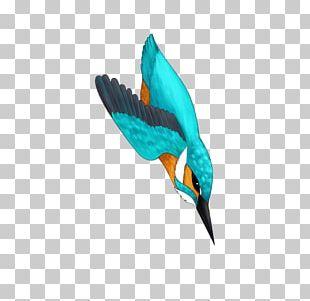 Bird Turquoise Teal Feather Beak PNG