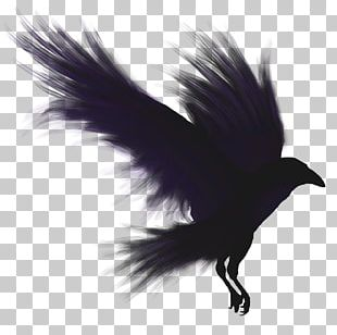 Bird Flight Common Raven American Crow PNG