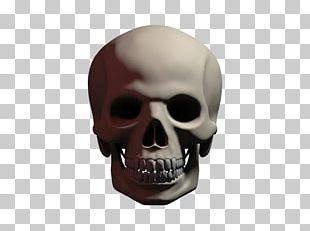 Human Skull Symbolism Skeleton Calavera Skull Art PNG