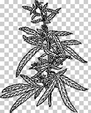 Cannabis Sativa Hemp Cannabidiol PNG