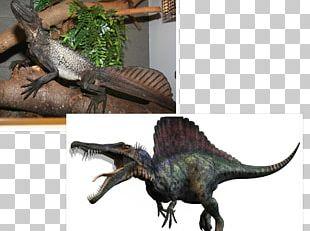 Spinosaurus Tyrannosaurus Giganotosaurus Carcharodontosaurus Carnivores: Dinosaur Hunter PNG