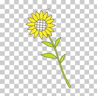 Sunflower Seed Yellow Sunflowers Pattern PNG