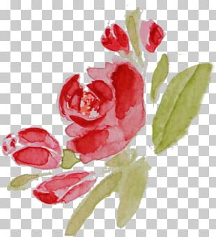 Flower Watercolor Painting Photography Drawing PNG