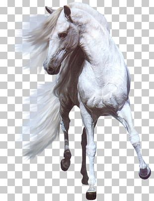 Andalusian Horse Arabian Horse White Horse Stallion Mare PNG