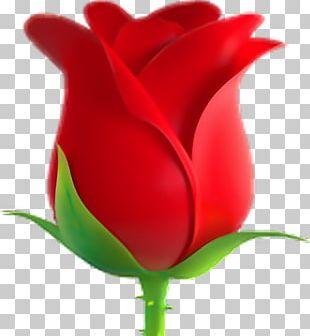 Emoji Rose Symbol Emoticon Sticker PNG