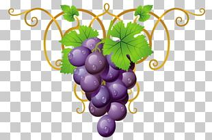 Papouli's Common Grape Vine PNG