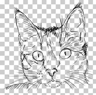 Cat Drawing Kitten Line Art PNG