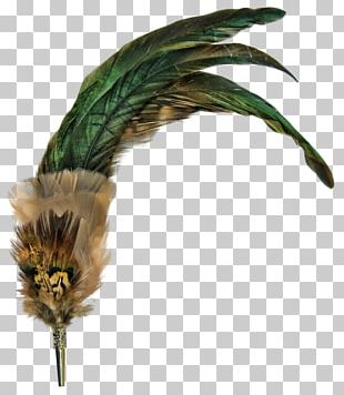 Feather Bird PNG