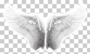 Angel Wing Icon PNG