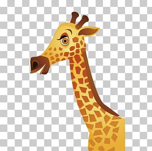 Giraffe Hippopotamus Lion Animal Jungle PNG