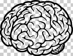 Human Brain Cognitive Science Neural Oscillation PNG