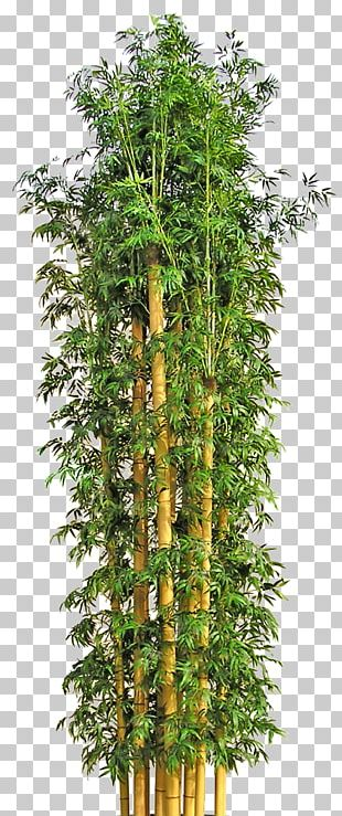 Tree Bamboo Flowerpot PNG