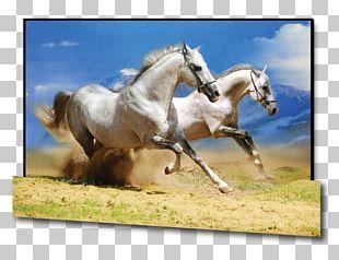 Desktop Icelandic Horse Photography Wild Horse PNG
