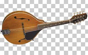 Ukulele Mandolin Musical Instruments String Instruments Guitar PNG