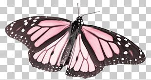 The Life Cycle Of The Monarch Butterfly Pieridae Stock Photography PNG