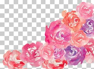 Flower Pink Garden Roses Floral Design PNG