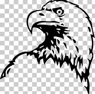 Bald Eagle Cross Peña Del Águila PNG