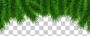 Christmas Pine PNG