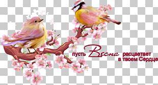 Cherry Blossom Branch PNG