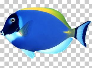 Fish Chomp Goldfish Tropical Fish Coral Reef Fish PNG