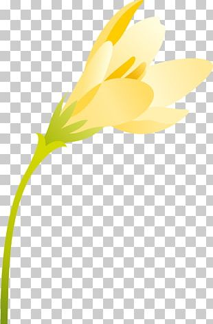Flowering Plant Daisy Family Petal Flowering Plant PNG
