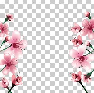 National Cherry Blossom Festival Paper PNG