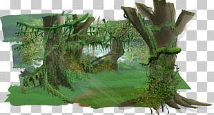 Jungle Euclidean PNG