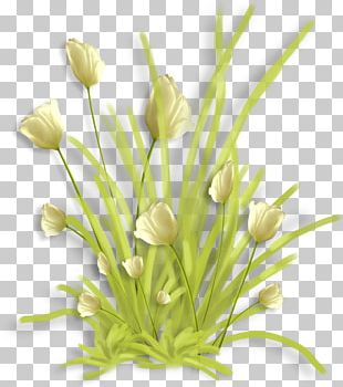Floral Design Cut Flowers Garden Roses PNG
