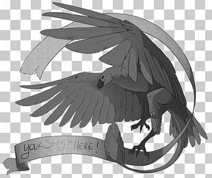 Bird Of Prey Drawing Beak /m/02csf PNG