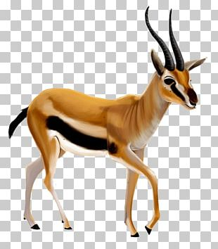 Bible Antelope Dorcas Gazelle An American Dictionary Of The English Language Acts Of The Apostles PNG