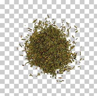 Rosemary Seasoning Herb Liquorice PNG