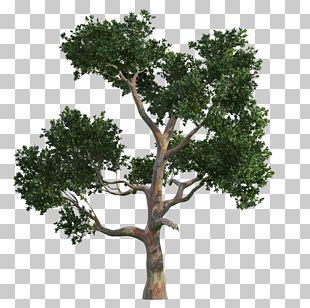 Tree Gratis Vecteur PNG