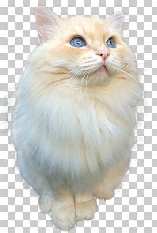Persian Cat Birman Norwegian Forest Cat Asian Semi-longhair Ragdoll PNG