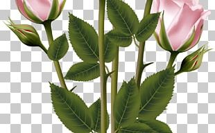 Rose Flower Bouquet PNG
