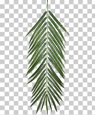 Plant Opacity Texture Mapping Leaf PNG