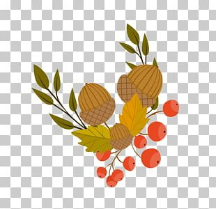 Autumn Leaf Color Illustration PNG