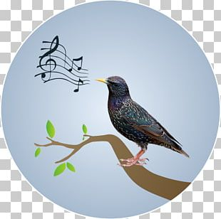 Musical Note Wall Decal Beak Poster PNG
