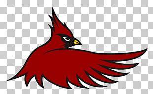 1998 St. Louis Cardinals Season Cardinal Hayes High School PNG