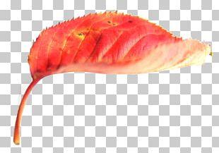 Autumn Leaf Color Red Deciduous PNG