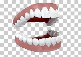 Human Tooth Stock Photography PNG