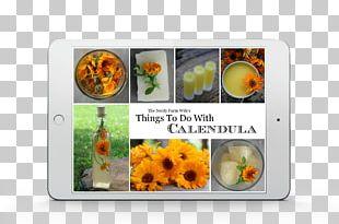 English Marigold Flower Medicinal Plants Herbalism PNG