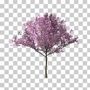Tree Branch Cherry Blossom PNG