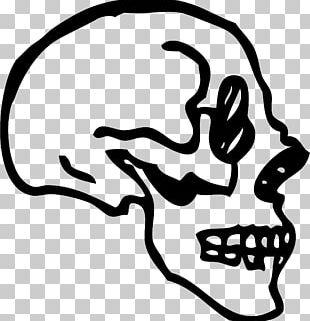 Skull Human Skeleton Drawing PNG