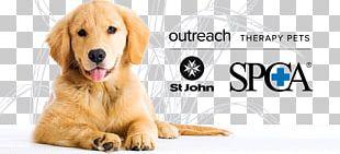 Golden Retriever Labrador Retriever Puppy Dog Breed PNG