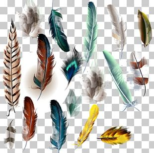 Bird Feather Watercolor Painting Illustration PNG