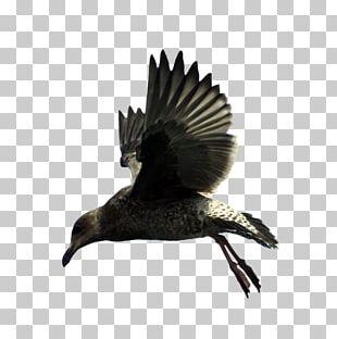 Bird Beak Feather Wing Fauna PNG